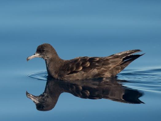 Seabird Monitoring